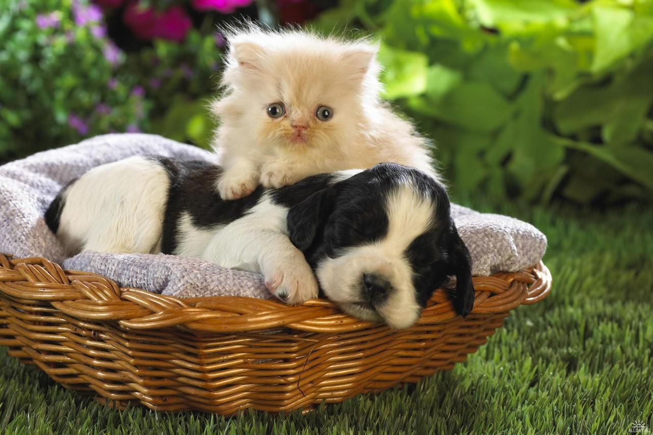 Доброе, прикольные картинки котят и щенков