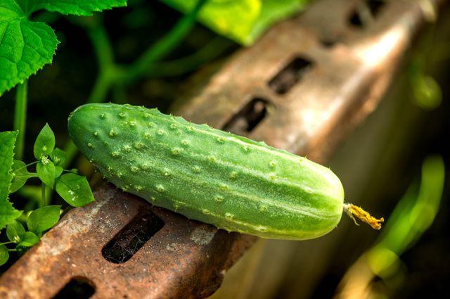 Чем полезен один из самых любимых овощей в России?