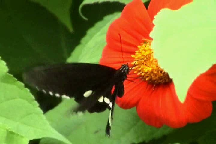 Butterfly.wmv