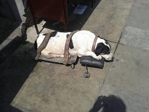 Его нашли на вокзале, привязанным ремнями к доске на колесах