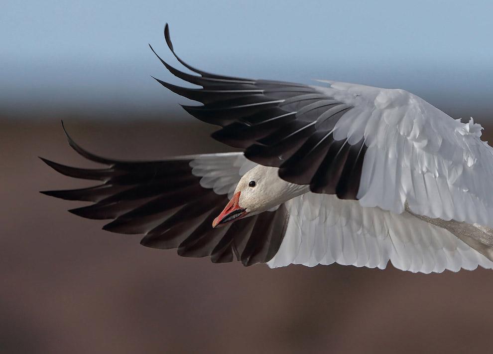 Потрясающие фотографии птиц