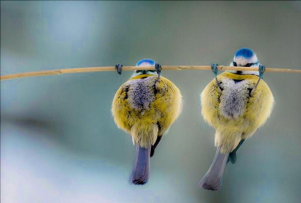 угарные картинки про птиц раз неделю практикует