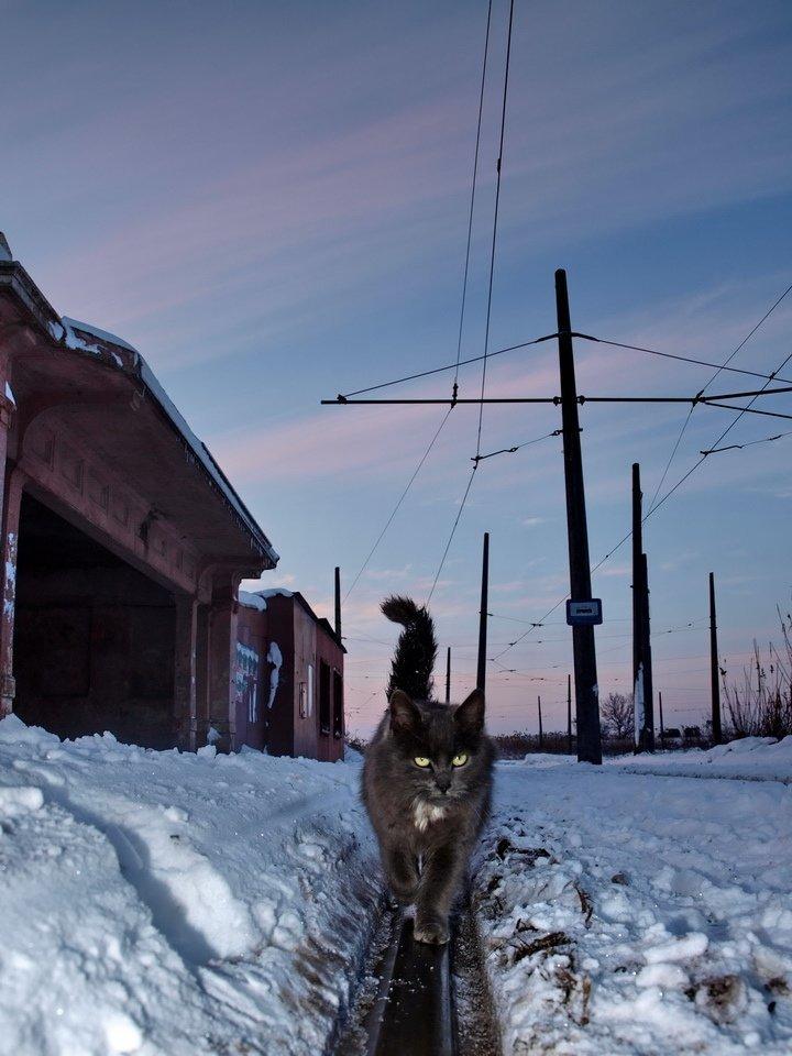 Очень колоритные уличные коты город, кот, кошка, уличная жизнь, уличный кот, эстетика