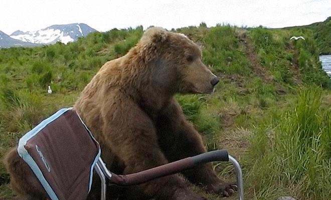 Медведь пришел из леса и присел рядом с рыбаком. Мужчина медленно достал камеру и стал снимать