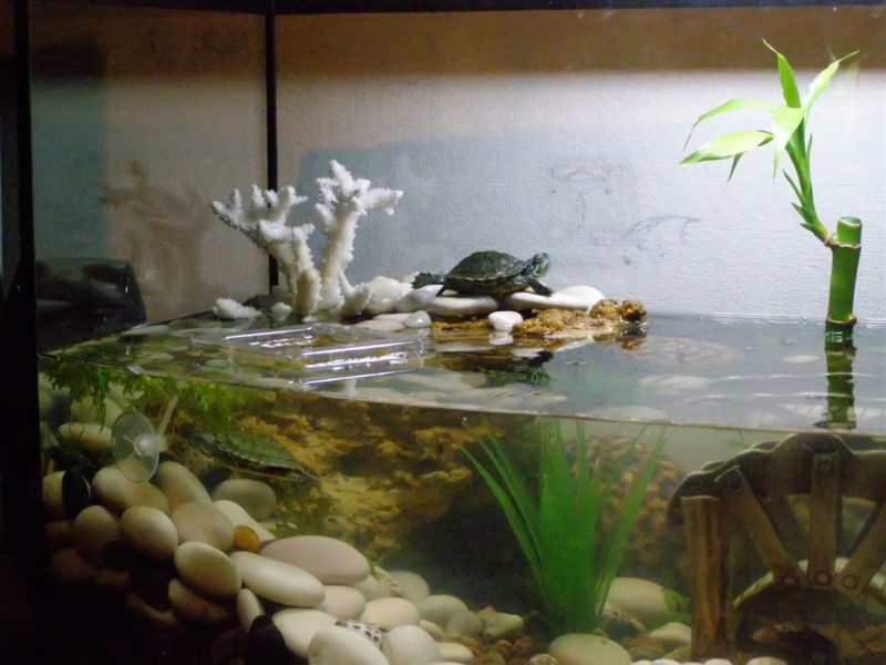 Оформление аквариума: фото-обзор, стильных решений дизайна  аквариум,советы