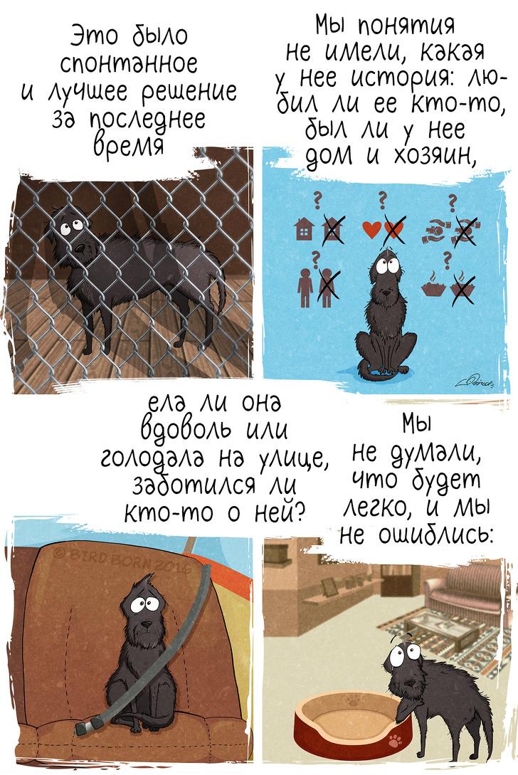 10+ вещей, которые мы поняли, когда взяли собаку из приюта