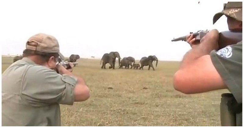 «Стреляй ему между глаз!»: Охотники сняли убийство слона, а затем видео случайно попало в Сеть