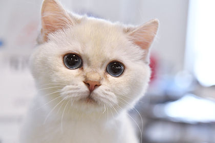 Кот помог спасти найденного у тела матери ребенка в Москве Силовые структуры