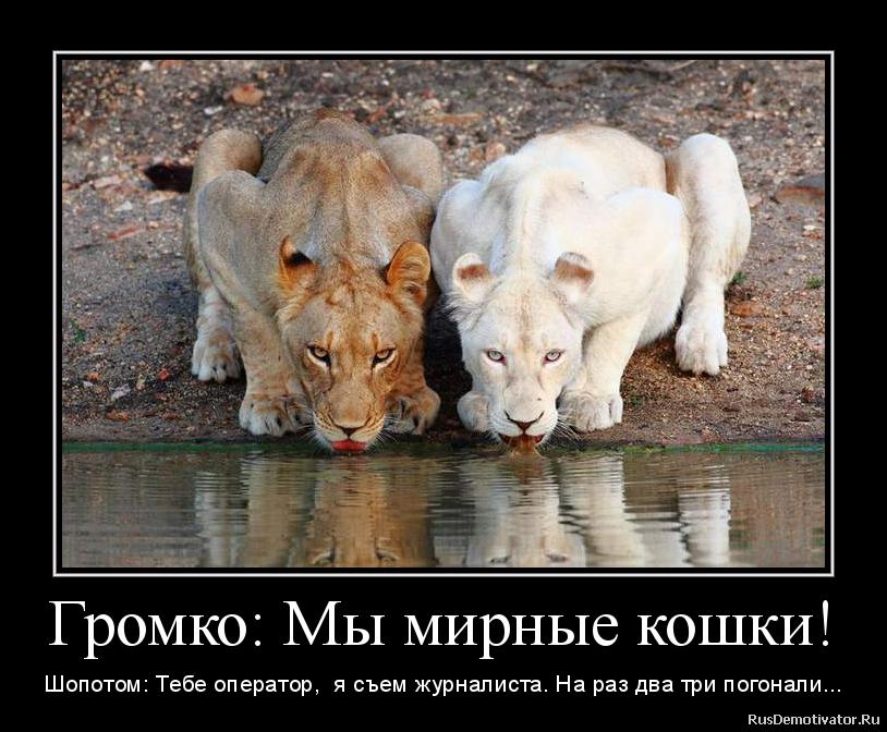 Смотреть демотиваторы про животных