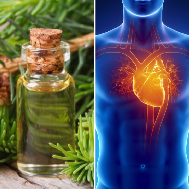 лечение сердца живицей