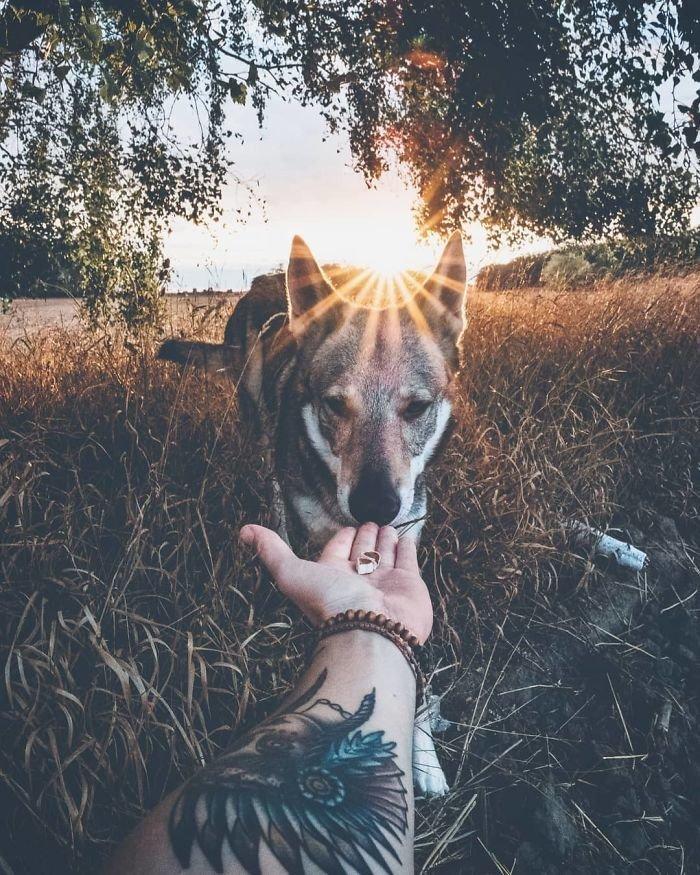 8. follow me, инстаграмм, собака, собака - друг человека, флешмоб, флешмобы. instagram, фото природы, фотограф