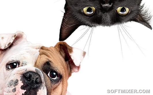 Странные привычки домашних животных