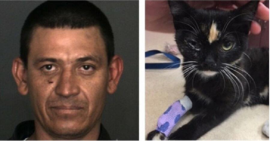 В Калифорнии мужчина посадил котенка в морозилку, а потом выбросил его с балкона