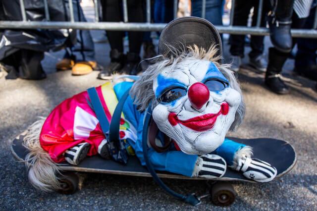 Самые яркие персонажи ежегодного костюмированного парада собак на Хэллоуин в Нью-Йорке