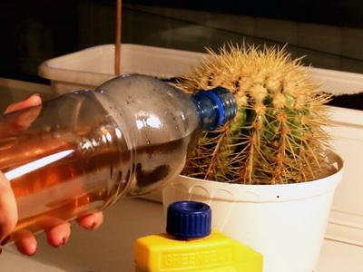 Уход за кактусами - Всё о кактусах