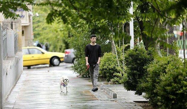 В Тегеране запретили гулять с собаками ynews, выгул собак, иран, новости, собаки, странные законы, страх и ненависть в Тегеране, тегеран