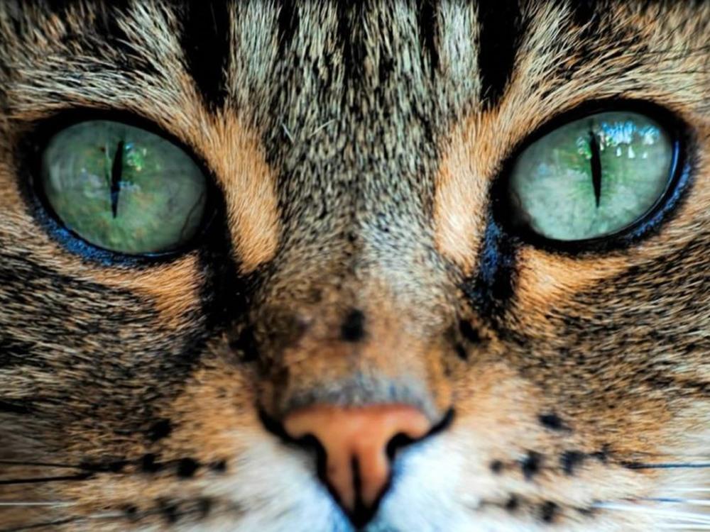 Из-за уникальной патологии девочка родилась с «кошачьими» глазами. Фото