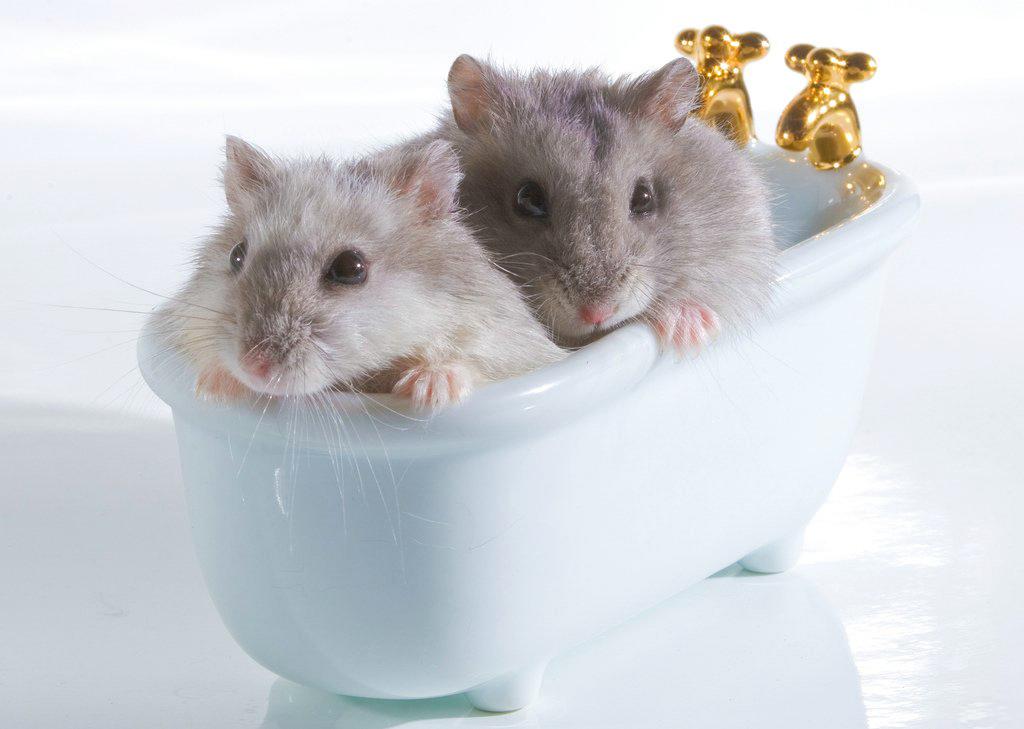Случай в ванной