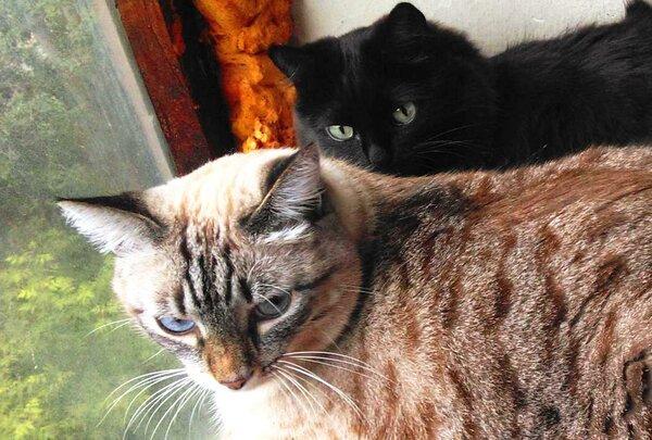 Коты готовят важное, взвешенное и солидарное обращение ко мне