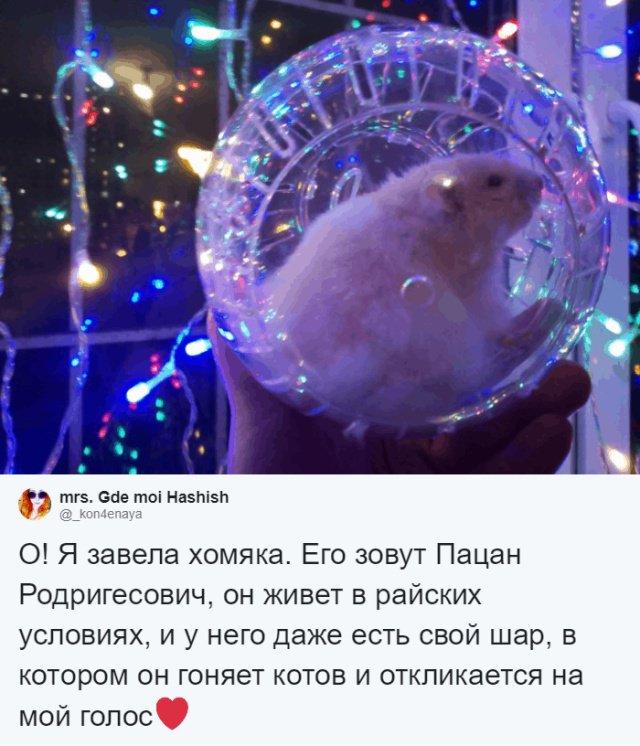 Пользователи соцсетей о необычных кличках домашних питомцев