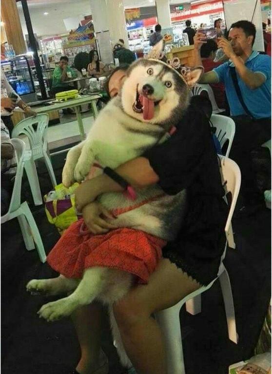 25 доказательств того, что хаски - лучшая порода собак!