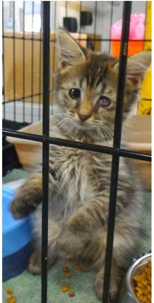 Дом меняет все: 35 фото котиков до и после усыновления домашние животные,наши любимцы