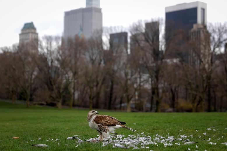 Природа вторгается в города во время карантина