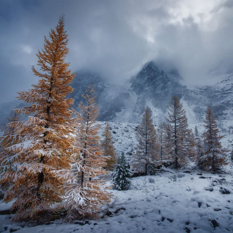 Республика Алтай горы, леса, природа, природа России, российская природа, россия