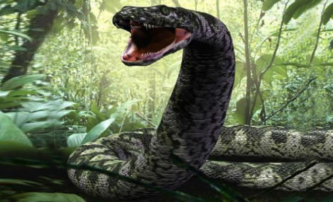 Змеи-гиганты, которые охотились даже на динозавров динозавры