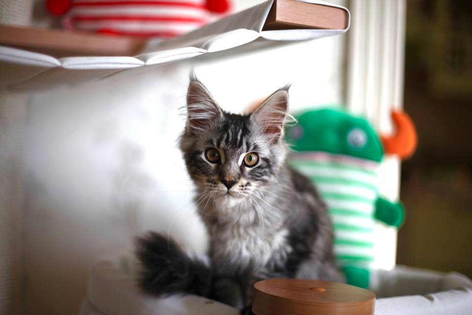 Итак, у нас обновка — в доме поселился маленький кот!