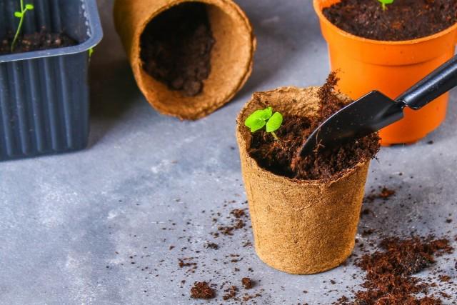 13 комнатных растений, котор…