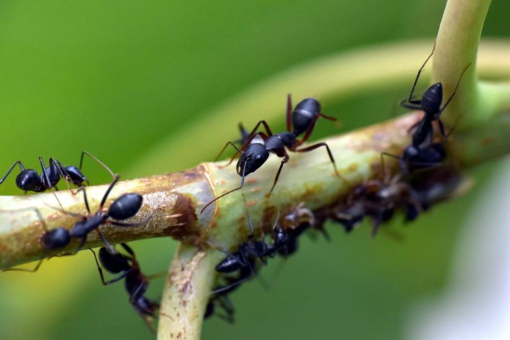 Животные против эпидемий. Как муравьи борются с грибками, а воробьи — с малярией