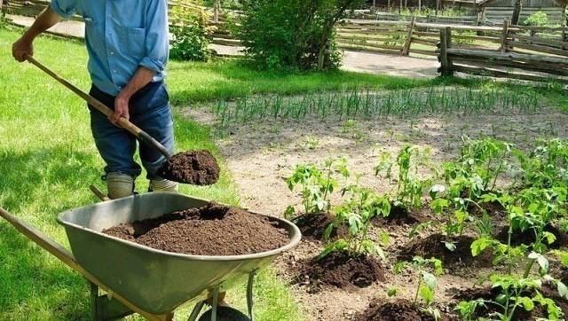 «Минералка» для огорода - чт…