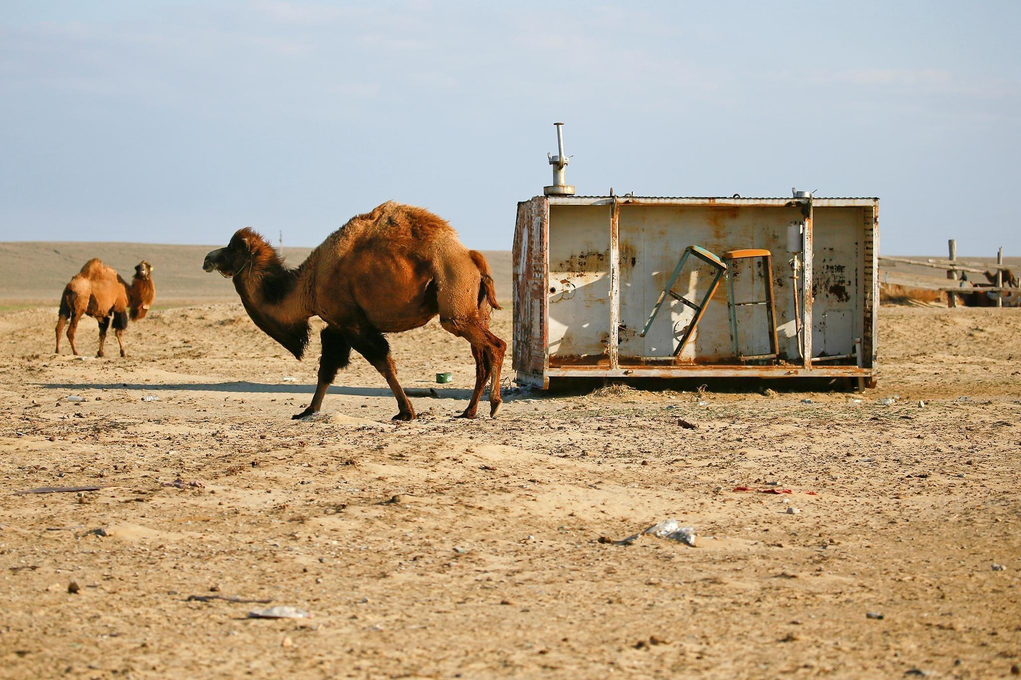 Природный памятник человеческой глупости: что осталось от Аральского моря Аральское  море,Казахстан,рыбный промысел