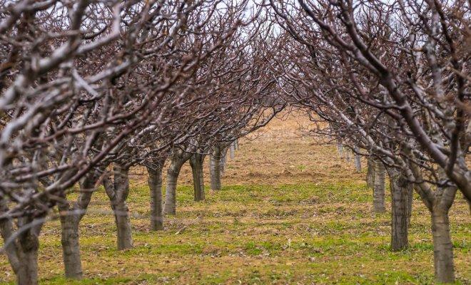Крона дерева и жизнеспособность деревьев