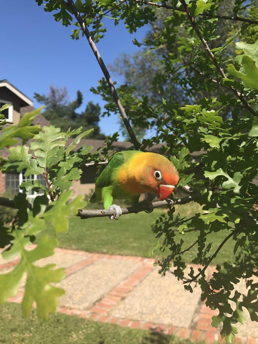 Простое счастье попугая Киви