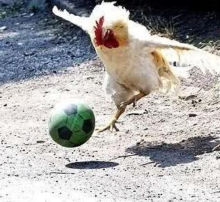 Англичане тренируются с курицами