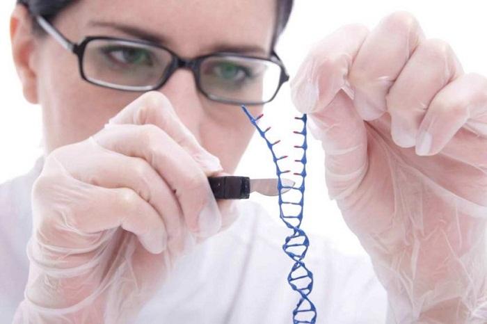 Американские генетики успешн…