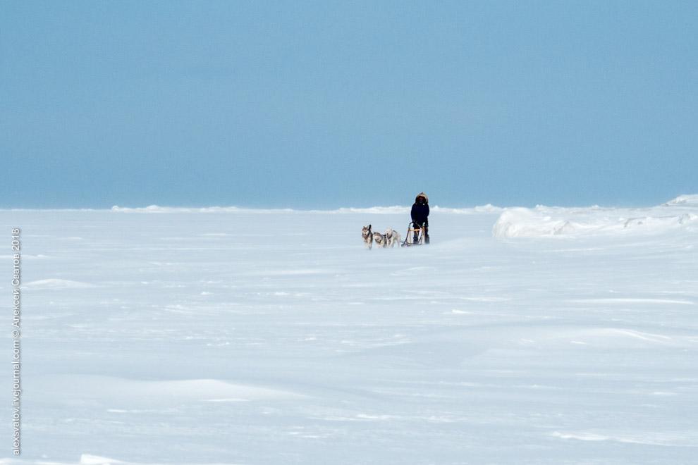 Покатушки на собаках по льдам Байкала