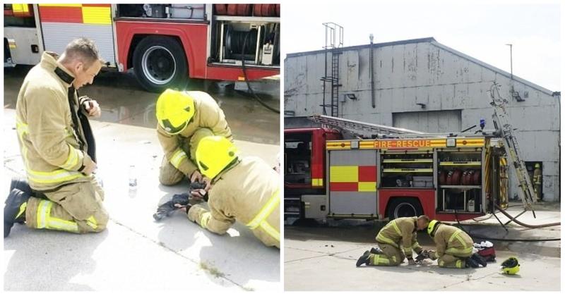 Пожарные вернули к жизни голубей, оказавшихся в плену пламени
