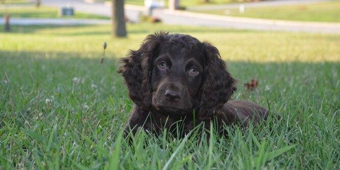 10 пород собак, о которых вы не слышали домашние животные,животные,собаки
