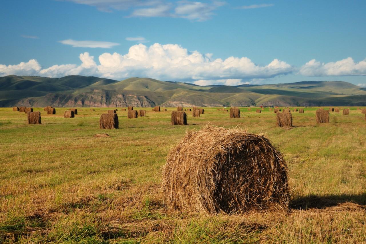 Осень в Сибири. красота, природа, россия