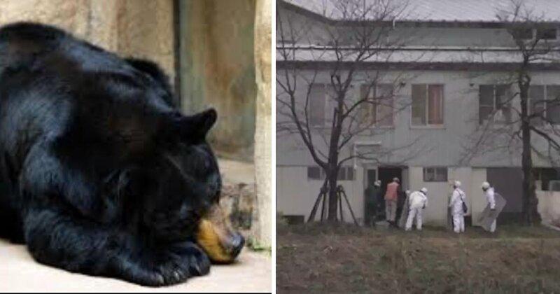 Прямо вполиклинике: медведь выбрал себе уютное местечко дляспячки