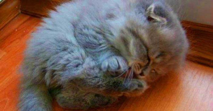 Старушка и представить не могла, какого кота она подобрала на улице и спасла