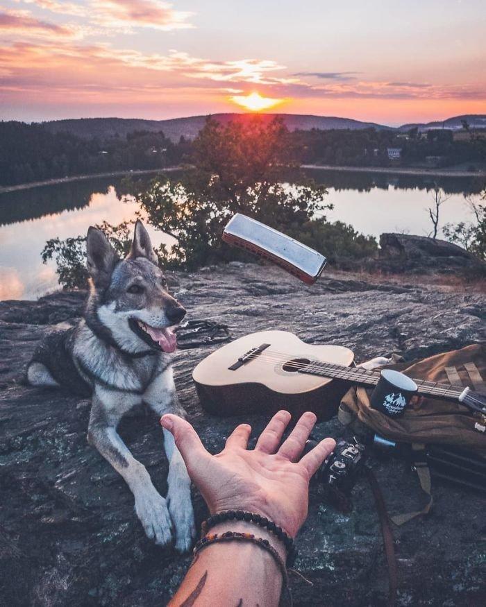 20. follow me, инстаграмм, собака, собака - друг человека, флешмоб, флешмобы. instagram, фото природы, фотограф