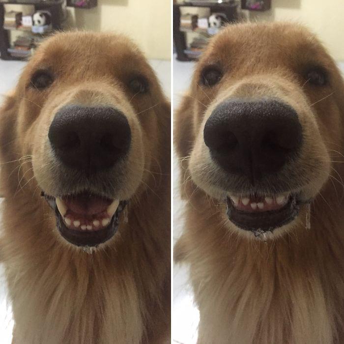 30+ фотографий животных до и после того, как их похвалили
