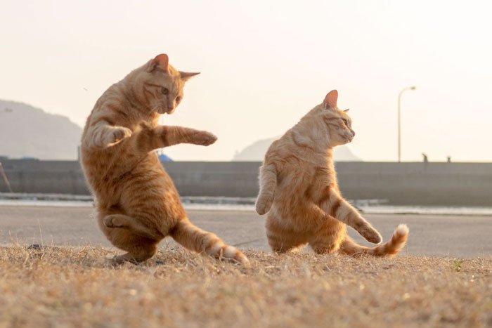 Смешные картинки приколы танцы