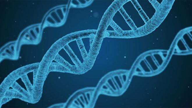 Ученые нашли механизм работы бессмертия бессмертие,биология,генетические мутации,днк,здоровье,наука,Пространство,теломераза,фермент,хромосомы