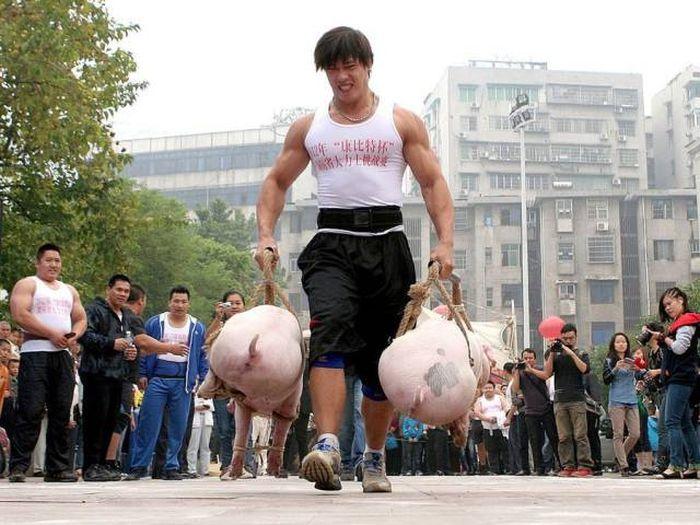 Смешные картинки китаец на свинье, днем рождения