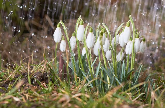 Чем на самом деле пахнет весна?